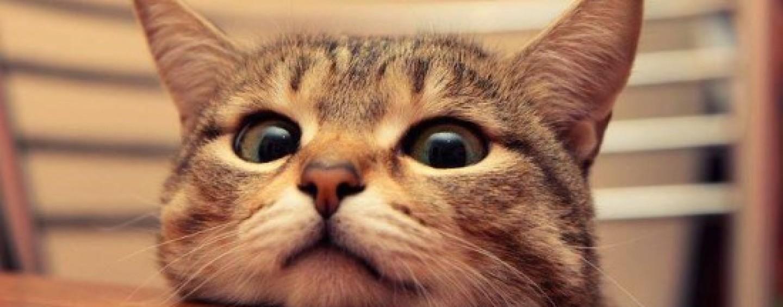 Giornata Mondiale del gatto, trionfo social anche ad Avellino