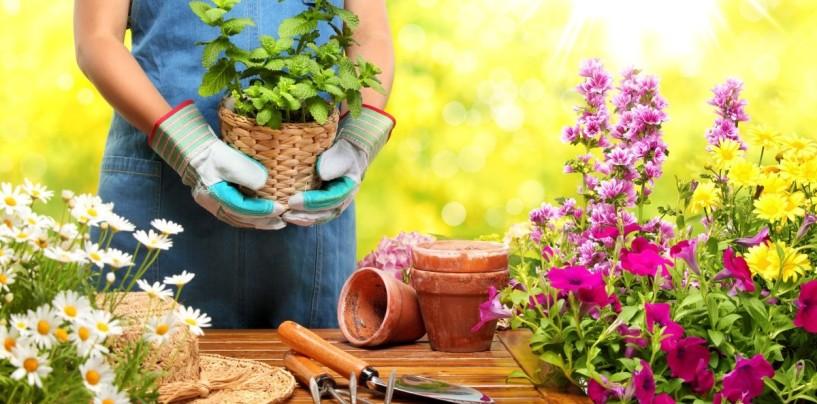Garden Therapy: la cura dello stress passa dal giardinaggio
