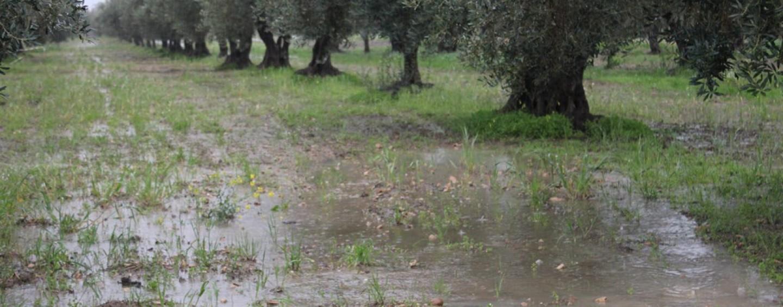 Violento temporale e fulmini su Flumeri causano danni alle colture