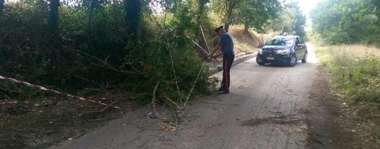 Torre le Nocelle – Un albero cade su un'auto con tre persone a bordo