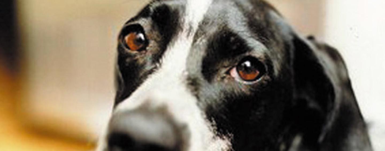 FOTO/ Orrore nel Baianese, ritrovato cane privo di vita e con le zampe legate