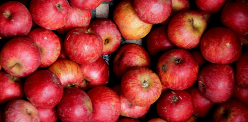 """Melannurca Campana dalle mille proprietà: cosa c'è da sapere sulla """"regina delle mele"""""""