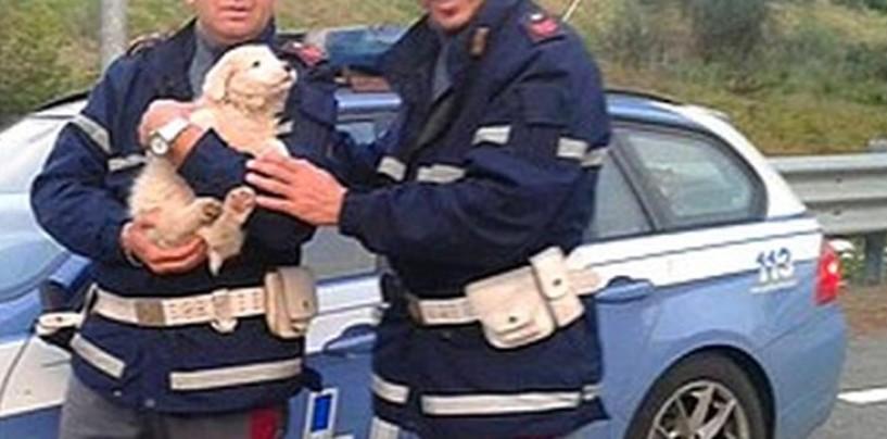 "Abbandona pastore maremmano in Autostrada, la Polstrada denuncia padrone ""bastardo"""