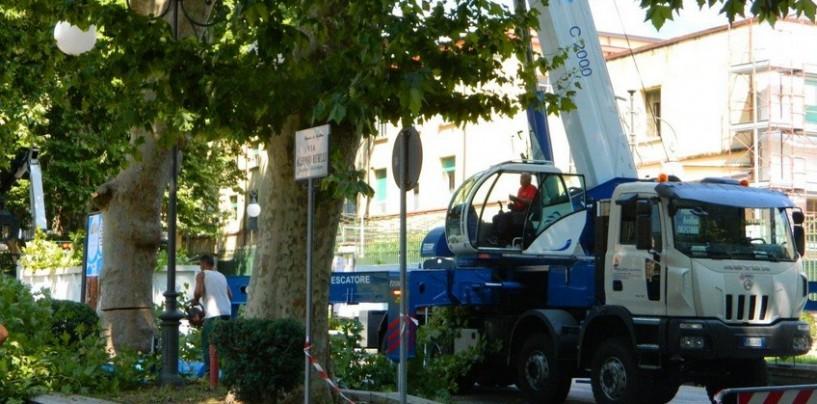Continua la strage dei platani: addio ad altri alberi