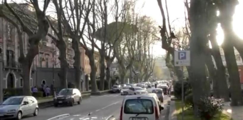 """Platani abbattuti a viale Italia, Cipriano: """"Indignato. Sono monumenti, non semplici piante"""""""