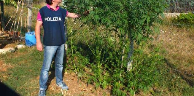 Castel Baronia, scoperta e sequestrata piantagione di marijuana