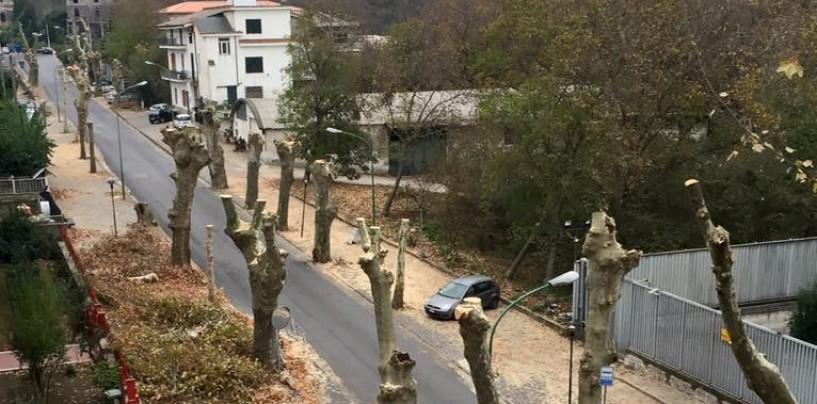 """Lauro, Boglione sulla potatura dei platani: """"Nessuno sfizio amministrativo"""""""