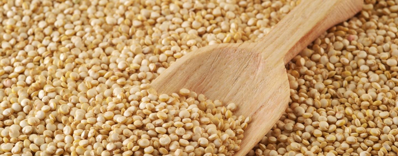 """Quinoa: benefici e proprietà di un prezioso alimento """"gluten free"""""""
