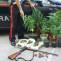 Pratola, coltivava marijuana sul terrazzo di casa: arrestati 60enne