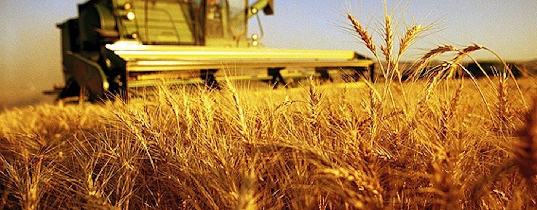 Formazione in agricoltura, corsi sui fitofarmaci a Monteforte