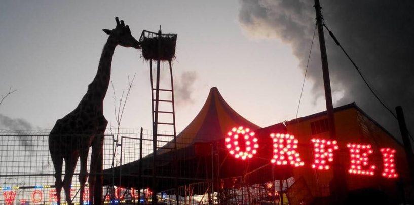 Avellino, il circo si attenda in città ed è subito protesta tra gli animalisti