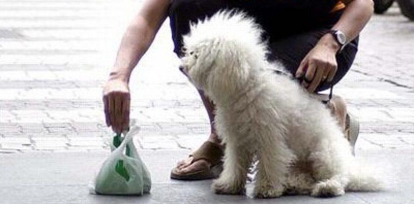 Deiezioni canine ad Avellino: arriva la sentenza del Tar