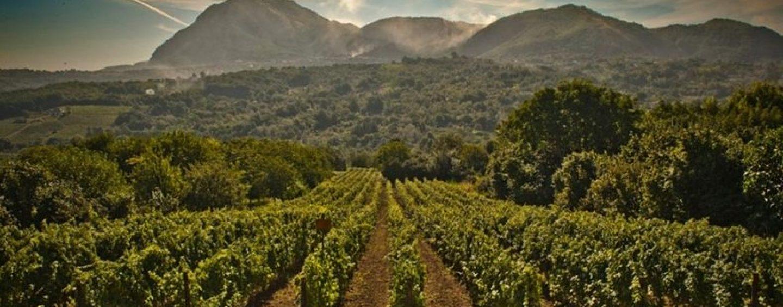 Biowine: D'Amelio, Mortaruolo e Petracca presentano il progetto per la tutela dell'aree vitivinicole