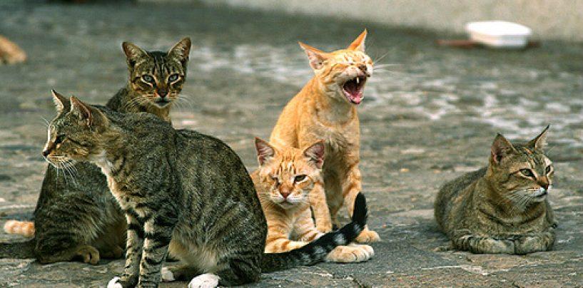 """Sterilizzazioni feline, Anpana denuncia: """"Rubate gabbie presso il cimitero di Avellino"""""""