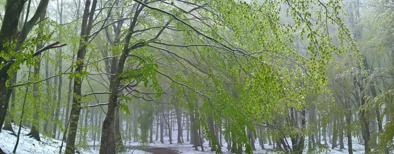 FOTO/ Ondata di freddo sull'Irpinia, torna la neve sul Partenio