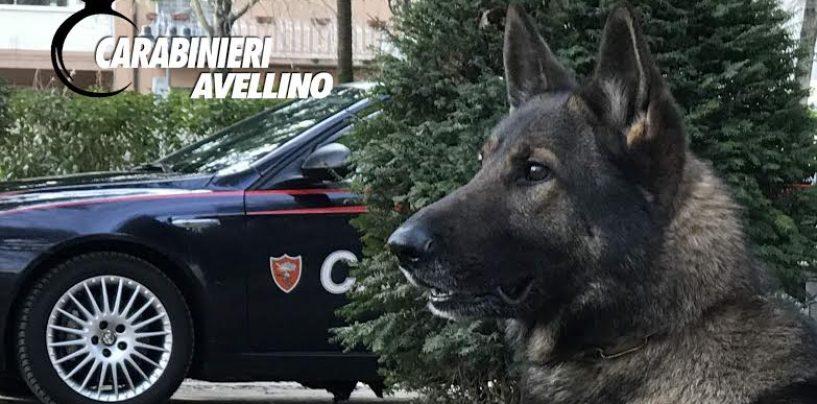Controlli alla movida della Valle Caudina: alcool e droga nel mirino dei carabinieri
