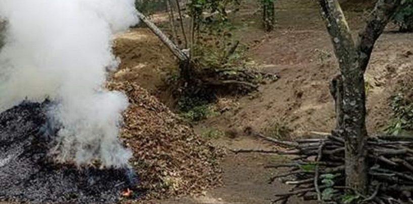 Abbruciamenti illeciti di residui vegetali, quattro agricoltori nei guai