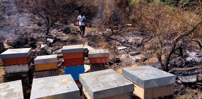 L'allarme della Coldiretti: 50 milioni di api morte negli incendi del Parco del Vesuvio