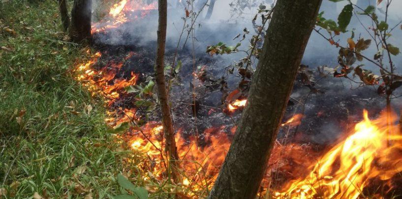 Rischio incendi, via libera al piano triennale della Regione