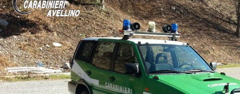 Tagliano faggi su Montevergine, sorpresi due ladri di legna
