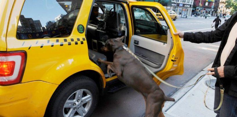 Pet-taxi ad Avellino, la Gaditriattiva il servizio di trasporto per gli animali