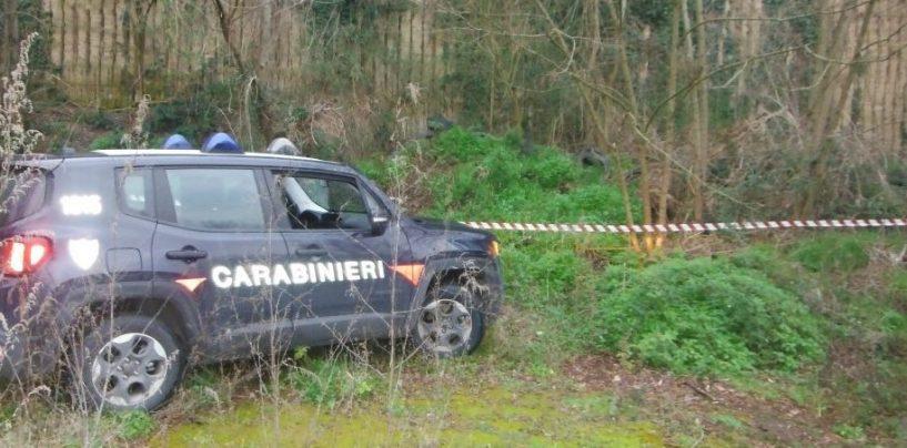Taglio abusivo di alberi: denunciate tre persone