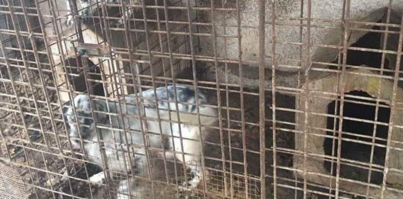 Maltrattamento di animali: due cani salvati dai Carabinieri, un terzo trovato morto tra stenti