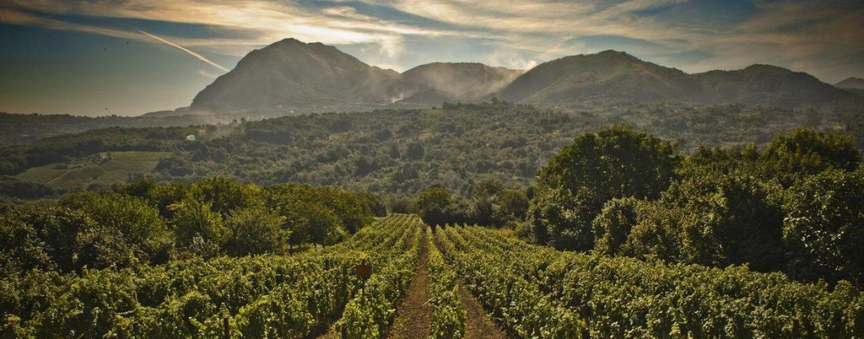 La Cia di Avellino al fianco del Consorzio Tutela vini d'Irpinia e dei viticoltori