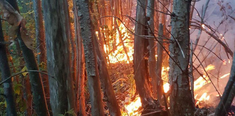 Incendi, bruciano i boschi in Irpinia: situazione critica