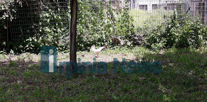 Parco Santo Spirito: degrado, sporcizia e galline. Cartolina per il prossimo sindaco