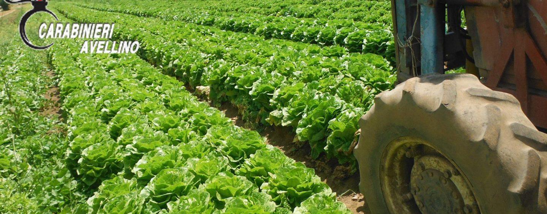 Sigilli ad un fondo agricolo di 3 mila metri quadrati, scoperti lavoratori in nero e senza permesso di soggiorno