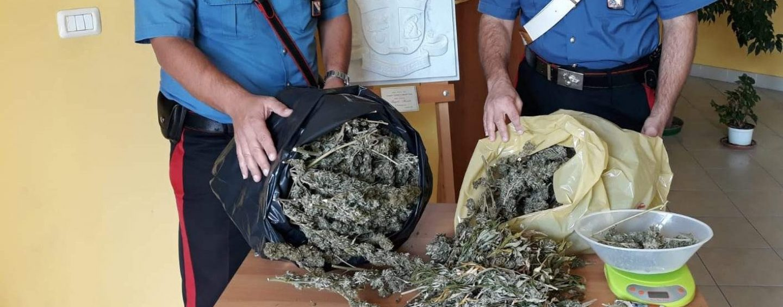 Nascondeva marijuana nella sua rimessa agricola: in manette 52enne