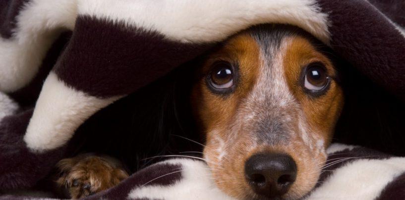 """""""No ai botti di Capodanno, pericolo per persone e animali"""": l'appello della Gadit"""