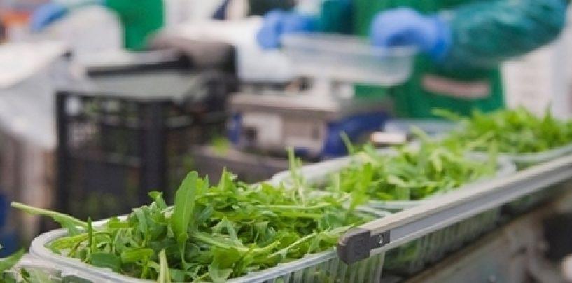 Rucola IGP al Fruit Logistica di Berlino, pronta a scalare la Top Ten del Made in Italy
