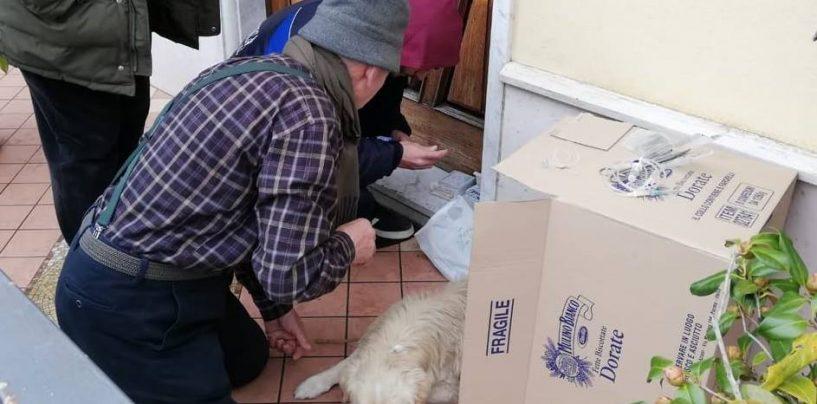"""A Montemiletto cani avvelenati, malmenati, impiccati: """"Vogliamo giustizia"""", il grido di SOS Natura"""