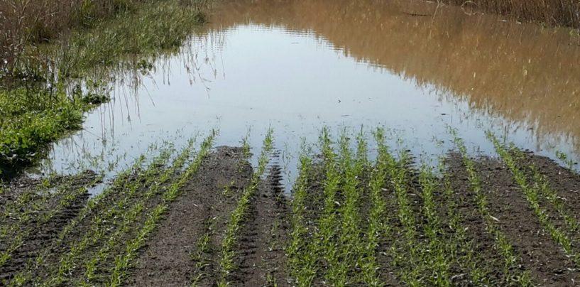 Freddo e pioggia, agricoltura in ginocchio: è allarme in Irpinia