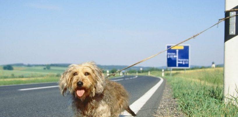 Cani abbandonati, già 361 nel primo ponte d'estate. 44 in Campania
