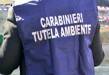 Blitz dei Carabinieri per traffico di rifiuti speciali