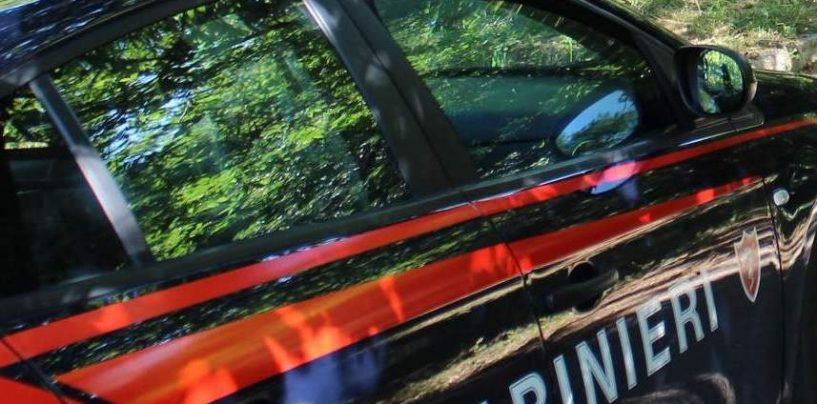 Con una motosega abbatte un faggio, denunciato per furto aggravato un 55enne