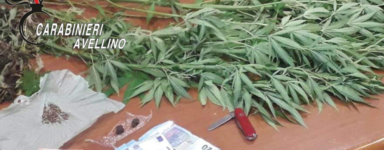 Coltivava e spacciava marijuana, scatta la denuncia per un uomo di Monteforte