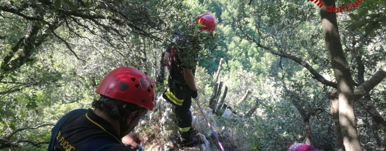 Vitellino in un dirupo a Volturara: salvato dai vigili del fuoco