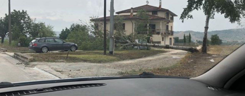 Nubifragio in Irpinia, alberi abbattuti e allagamenti