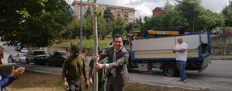 """FOTO / Avellino pianta un albero per l'Amazzonia. E presto arriverà il """"Piano urbano del verde"""""""