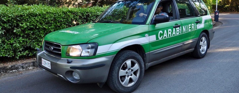 Attività non autorizzate in un bosco a Mercoglianio: sanzione di 4mila euro