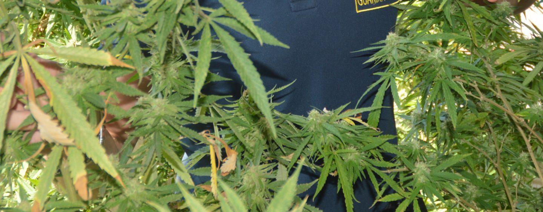 Sarno, maxi sequestro di cannabis: scoperte 136 piantine