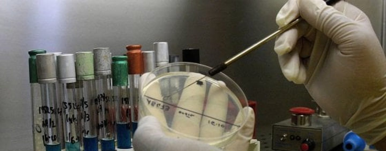 Khalili e Ferrante, gli scienziati che hanno eliminato l'Hiv dal Dna di topi geneticamente modificati ospiti in Irpinia
