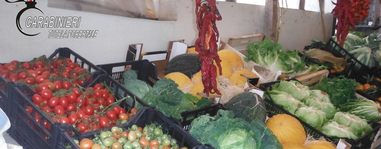 Sicurezza alimentare, irregolarità a Montemarano: scattano le sanzioni