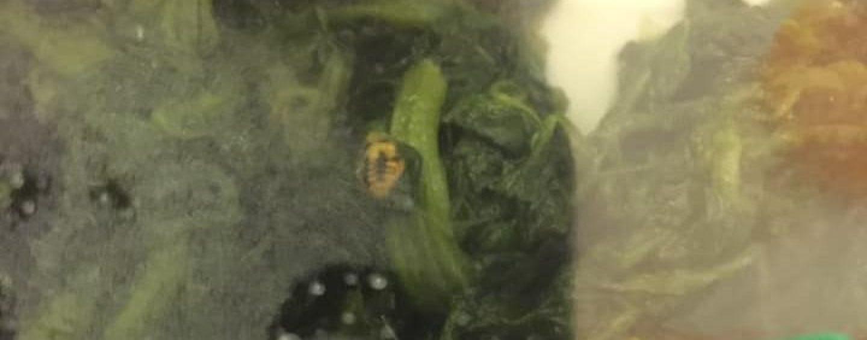 """Shock al """"Moscati"""": c'è un insetto vivo nell'insalata servita a una bimba"""