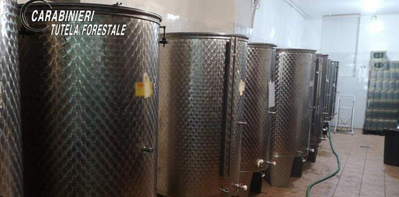 Olio e vino senza tracciabilità: due denunce e sanzioni per 200mila euro