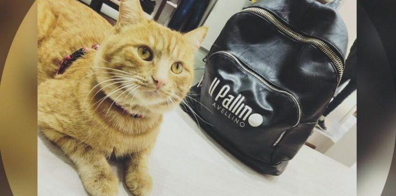 Smarrito Pio, il gatto di Via Dante. L'appello per ritrovarlo